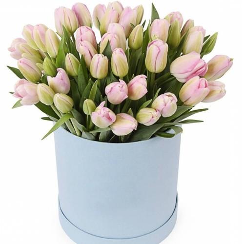 Коробка з рожевих тюльпанів Хлоя
